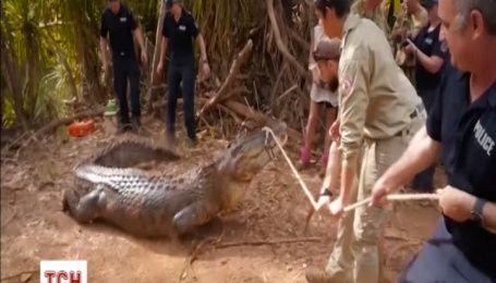 Австралійські поліцейські спіймали величезного крокодила, який зжер корову