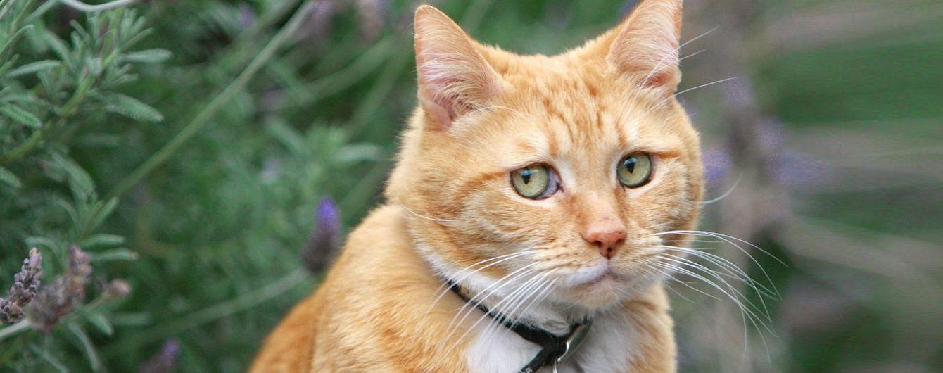 Учені звинуватили котів у вимиранні десятків видів тварин