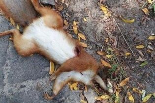 Столичні жителі виявили в Голосіївському парку розстріляних білок