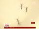 Вчені спрогнозували епідемію вірусу Зіка на двох континентах