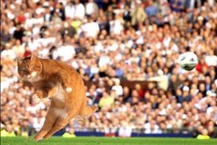 Рудий Кітіньо. В Інтернеті з'явився новий футбольний герой
