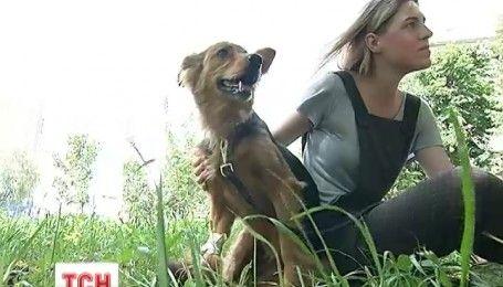 Бездомна собака Майя знайшла нову родину завдяки ТСН