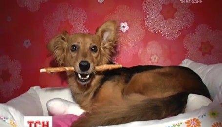 Після двох років поневірянь собака Майя знайшла нових господарів завдяки ТСН