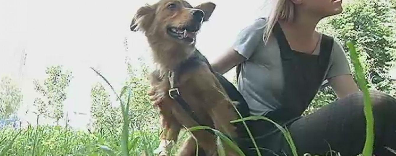 Бездомна собака Майя завдяки ТСН отримала нову родину
