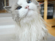 Собственный гардероб и тиара: в Instagram нашли уникальную кошку по имени Принцесса Аврора