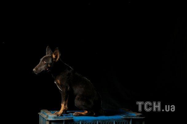 Як живуть тварини у притулку. Reuters показало болючі фото собачого життя