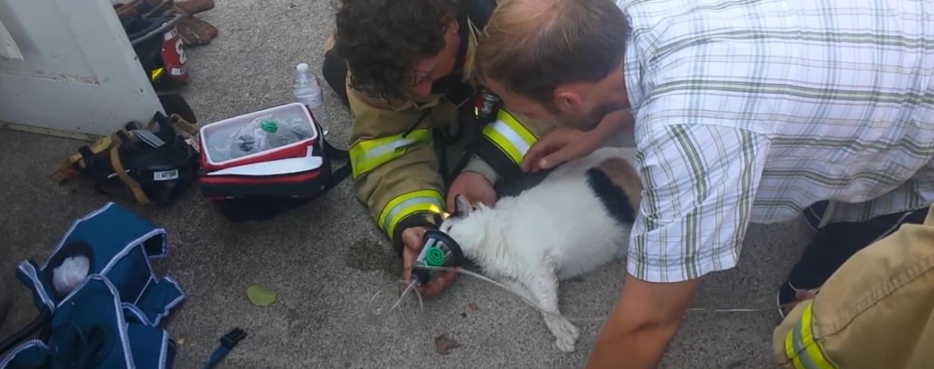 У Мережі набуває популярності відео із порятунком котика з палаючого будинку