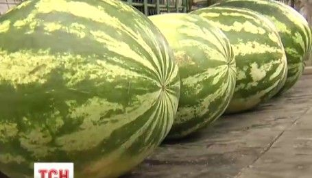 Нитратов - ноль: эксперты советуют лакомиться арбузами в начале сентября