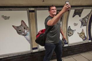 Музей котів. Британці замінили всю рекламу в метро на зображення безхатніх тварин