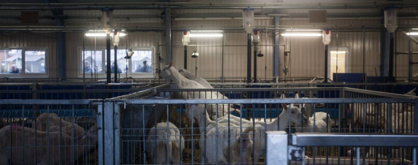 Бізнес по-українськи: історії бельгійського та вітчизняного фермерів, які борються проти системи
