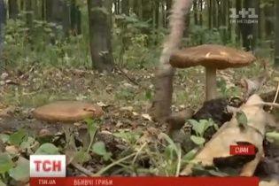 У Сумах ціла родина отруїлась грибами