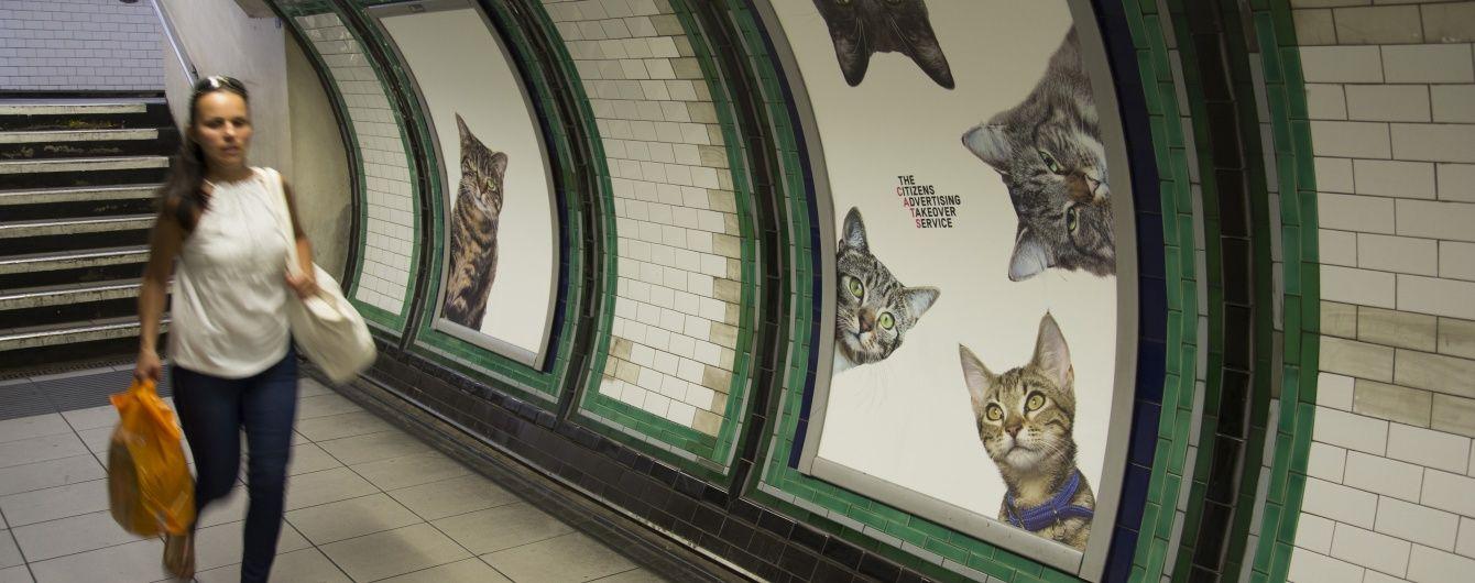 Музей котів у метро Британії та оригінальна акція найсексуальнішого онколога США. Позитиви тижня