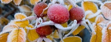 Бабье лето завершается - в Украине ожидаются первые ночные заморозки