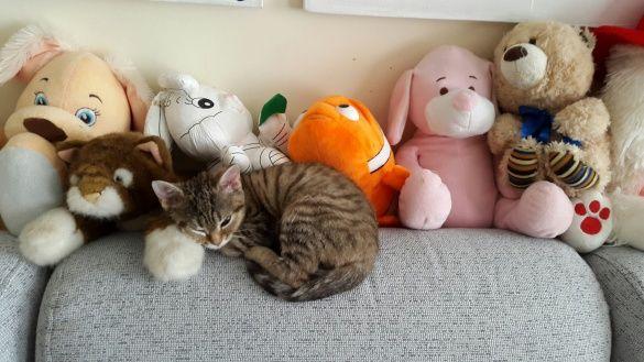 Коти Алли Мазур_3