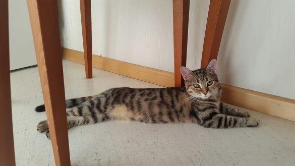 Коти Алли Мазур_4