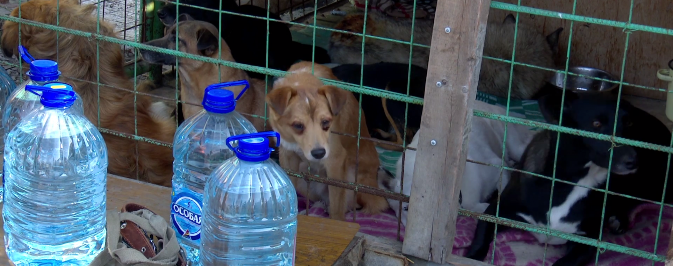 Понад 150 тварин згоріли заживо у притулку в Росії