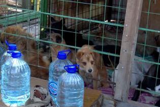 Более 150 животных сгорели заживо в приюте в России