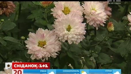 Новый способ заработка: украинцы воруют цветы с клумб и перепродают их