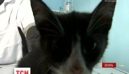 Студентка и бывший пациент сумасшедшего дома жестоко мучили котенка и сняли это на видео