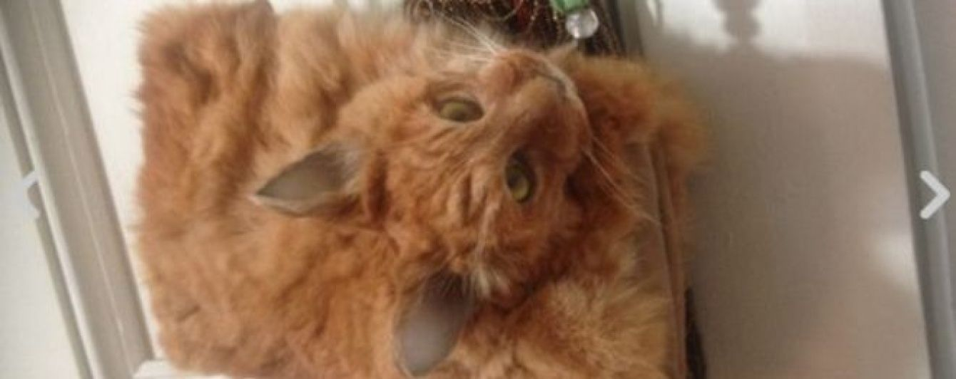 Зроблену з мертвого кота сумку продали на аукціоні в Новій Зеландії