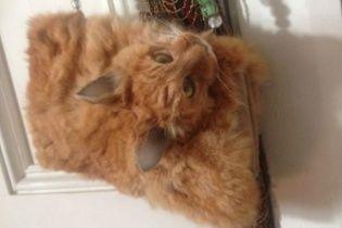 Cделанную из мертвого кота сумку продали в Новой Зеландии