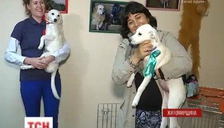 У Житомирі з'явився Центр захисту тварин