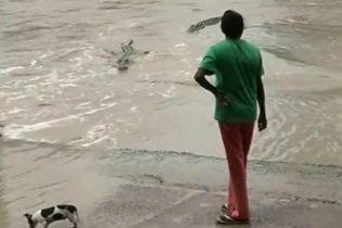 В Австралії жінка капцем прогнала величезного крокодила
