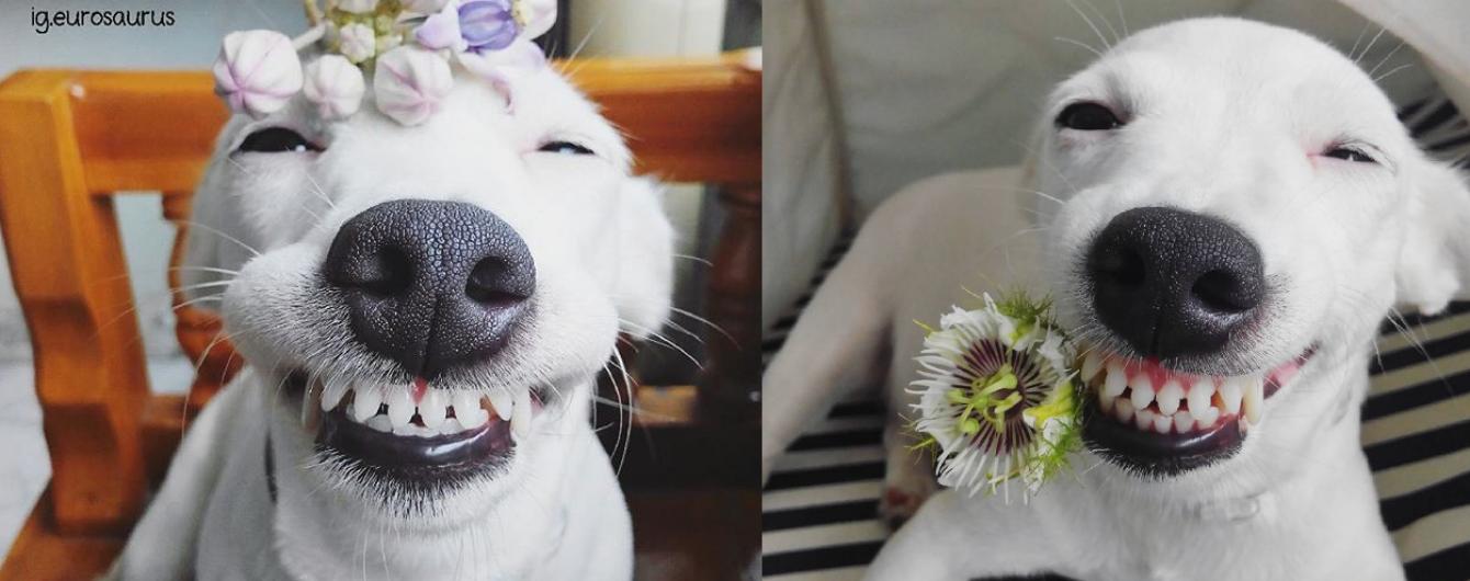 Instagram собаки-усмехаки и фото заснеженного Буковеля. Тренды Сети