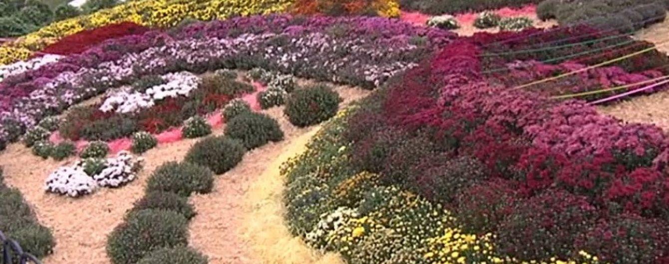 В Киеве составили рекордную 112-метровую композицию из цветов