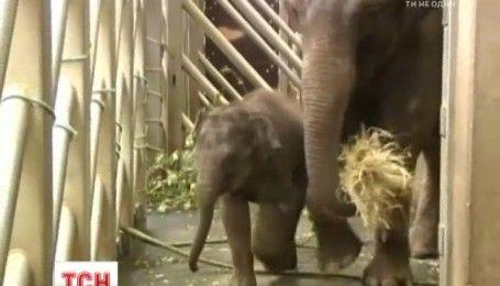 Посетителей пражского зоопарка познакомили с новорожденным слоненком