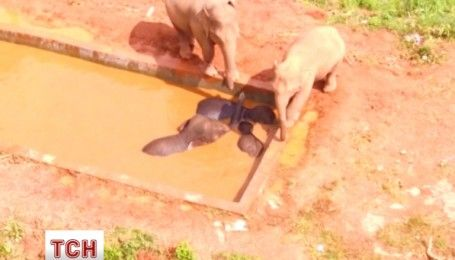 В Китае два дня продолжалась операция по спасению диких слонов