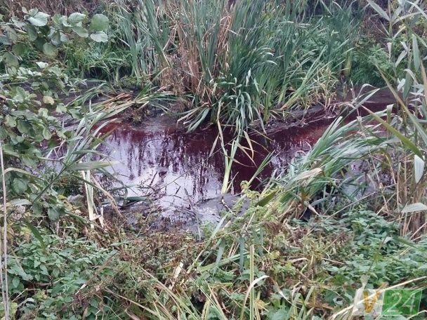 Кровавые реки: возле Луцка водоем стал багряным