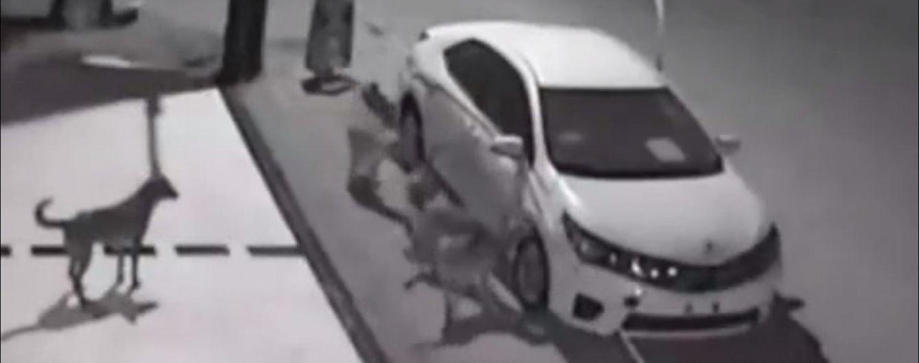 В Турции голодные псы пытались съесть автомобиль