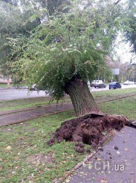 Улицы Одессы превратились в дебри из поваленных деревьев