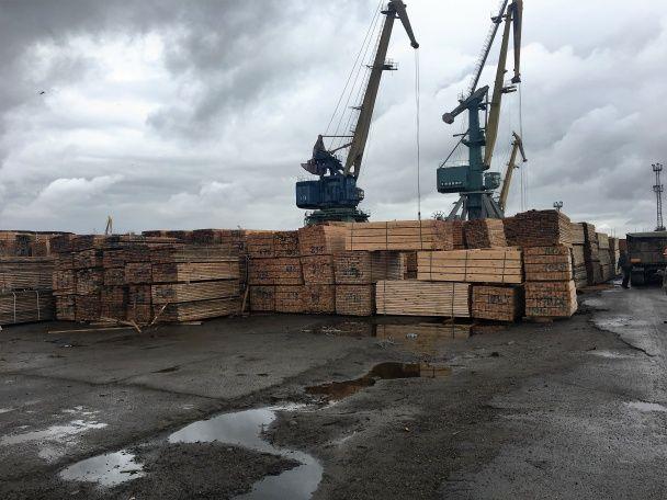 У Херсоні викрили схему масштабного нелегального експорту деревини