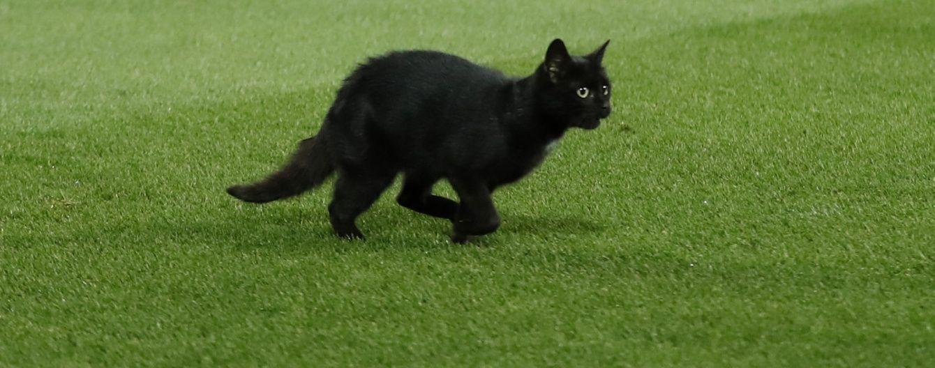 """Черный кот стал звездой Twitter во время матча """"Ливерпуль"""" - """"Манчестер Юнайтед"""""""