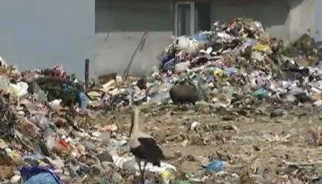 Львовский мусор добрался до Киева