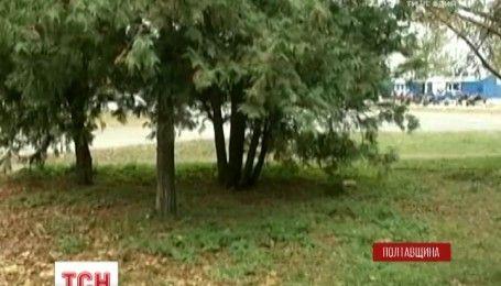 В Лубнах дети нашли под елками отрезанную человеческую голову