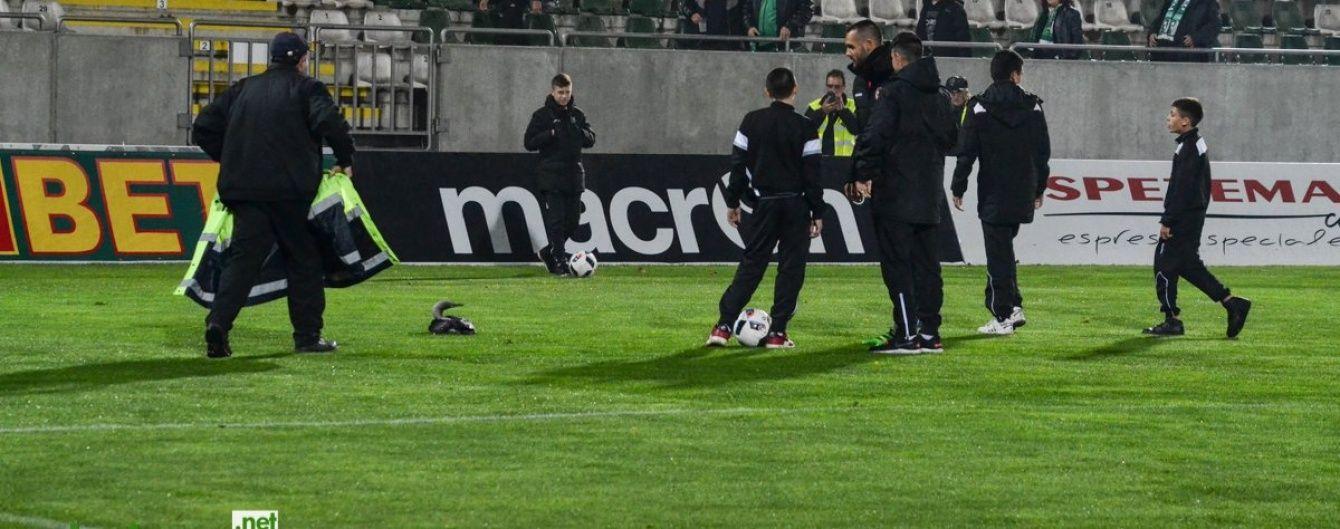 Кумедна дика качка приземлилася на футбольне поле, зупинивши матч чемпіонату Болгарії