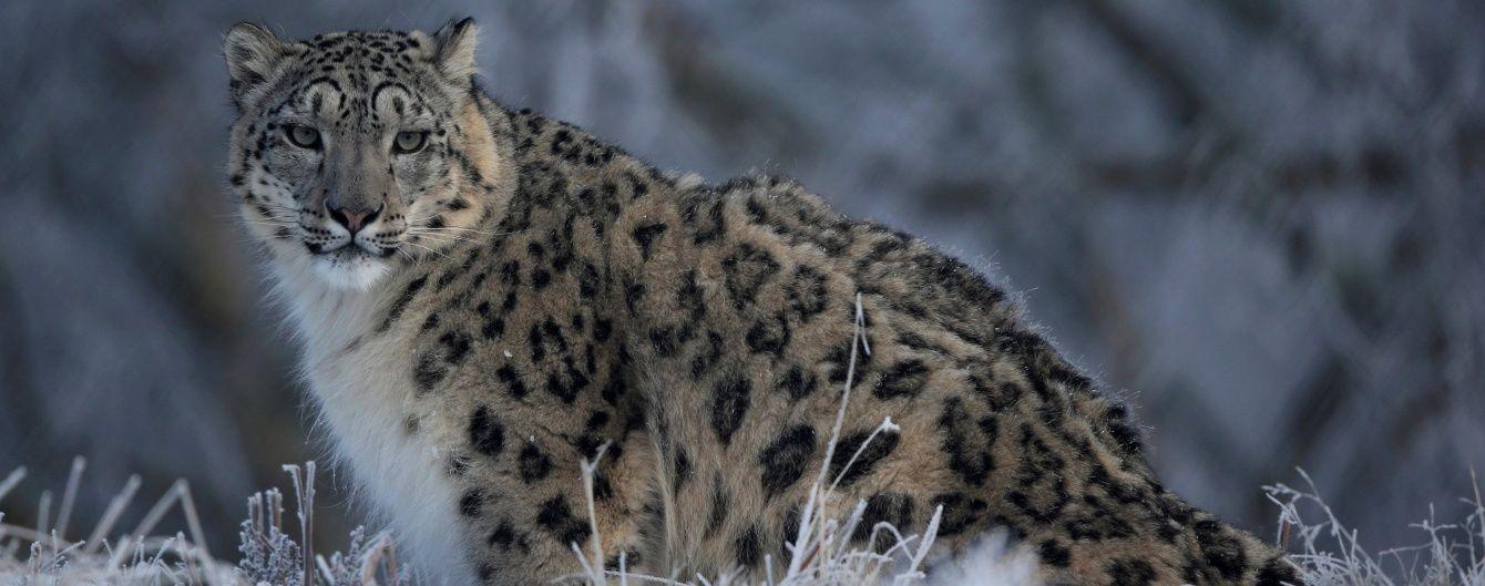 За останні 40 років популяція тварин у світі скоротилася на майже 60%