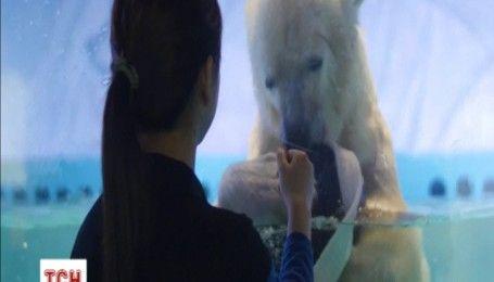 Защитники прав животных требуют освободить белого медведя из торгового центра в Китае