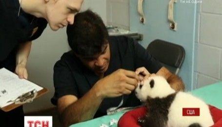 Видео с 2-месячными пандочками-двойняшками показали в зоопарке американской Атланты