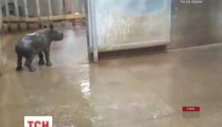 Водные процедуры устроили маленьком носорогу в зоопарке американского штата Айова