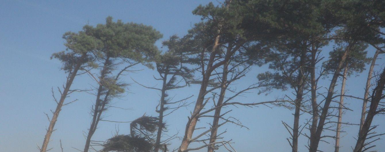 Синоптики предупредили об усилении ветра в Киеве