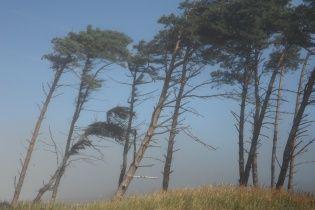 На Закарпатті через масштабну вирубку лісу висихають криниці та руйнуються дороги