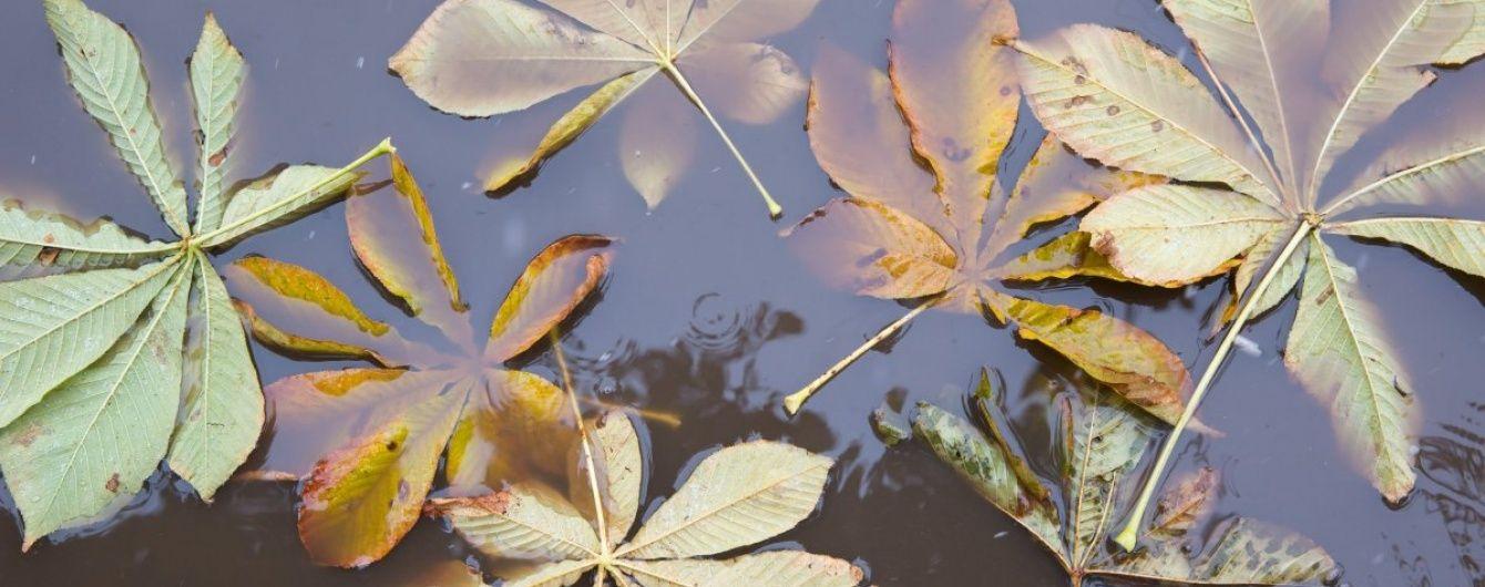 П'ятниця обіцяє бути без суттєвих опадів. Прогноз погоди на 4 листопада