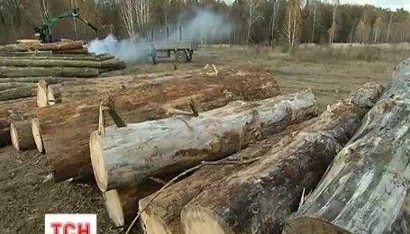 Селяне в селе Подлесье заблокировали дорогу, заметив незаконную вырубку соседнего леса
