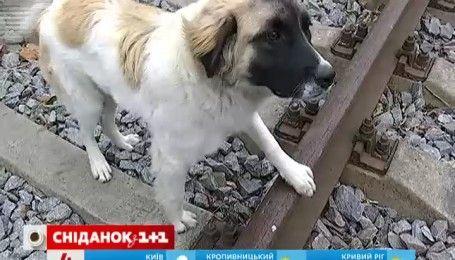 История об украинском Хатико