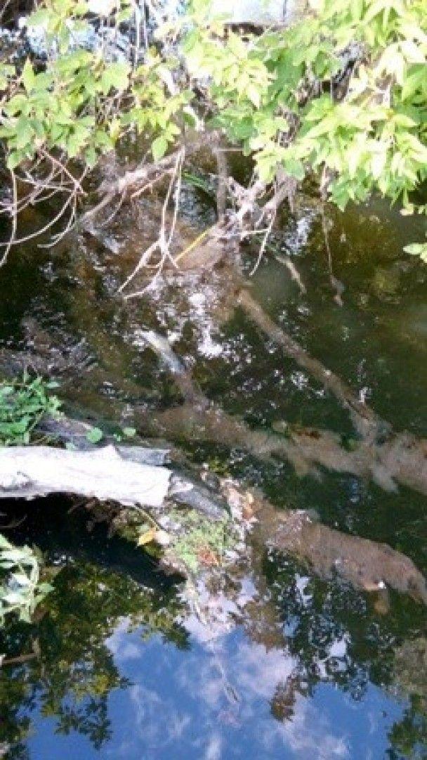 На Луганщині у річку скинули тонни хімікатів