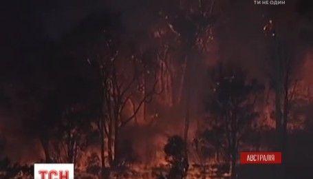 Сидней в огне: в пригороде австралийской столицы произошел масштабный пожар
